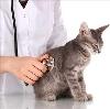 Ветеринарные клиники в Брежневе